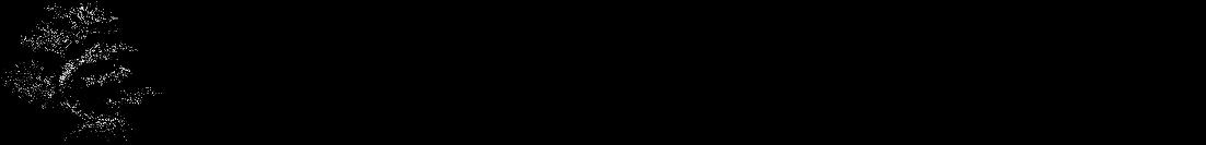 Karate Verein Rosbach e.V.